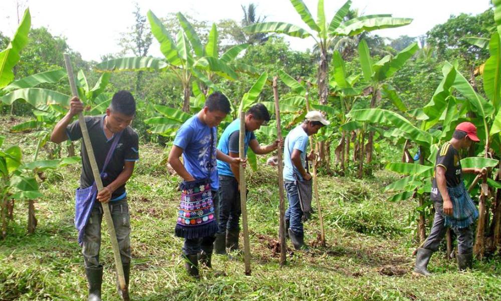 planting_bananas